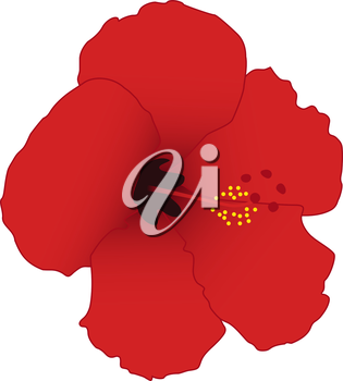 Red hibiscus isolated on white background. Vector illustration.