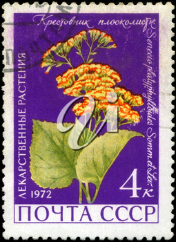 USSR - CIRCA 1972: A stamp printed in USSR show Groundsel, series is devoted to medicinal plants, circa 1972