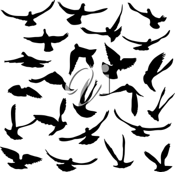 Concept of love or peace. Set of silhouettes of doves.