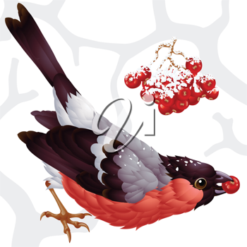Royalty Free Clipart Image of a Bullfinch Eating