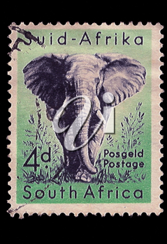 Royalty Free Photo of an Elephant Stamp