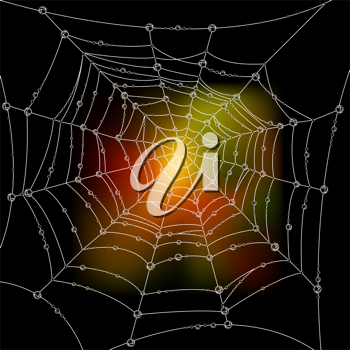 Royalty Free Clipart Image of Autumn Colours Behind a Spiderweb