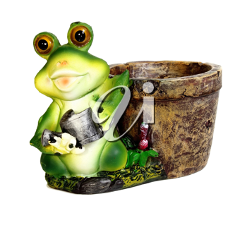 frog a flowerpot isolated on white background