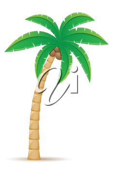palm tropical tree vector illustration isolated on white background