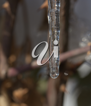a drop of ice in nature. macro