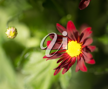 background of beautiful flowers