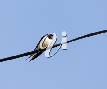 Swallow Outdoors