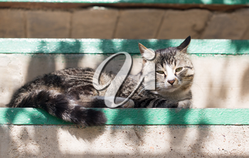 cat lying on a porch