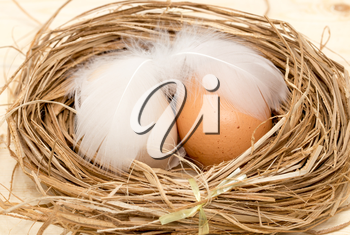 chicken eggs in a nest with feather
