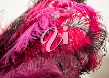 Beautiful fluffy red bird feathers as background