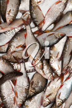 Royalty Free Photo of a Bunch of Fish