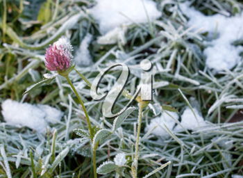 Royalty Free Photo of Frozen Grass