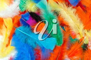 Royalty Free Photo of Colourful Feathers