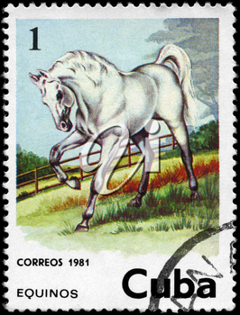CUBA - CIRCA 1981: A Stamp printed in CUBA shows the image of the Horse, value 1c, series, circa 1981