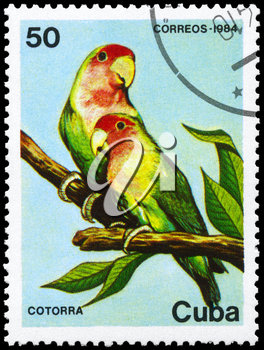 CUBA - CIRCA 1984: A Stamp printed in CUBA shows image of a Parrots  from the series Fauna, circa 1984