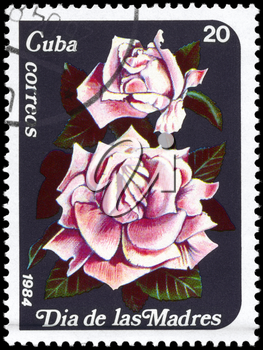 CUBA - CIRCA 1984: A Stamp printed in CUBA shows image of a Pink roses, from the series Mother's Day, circa 1984
