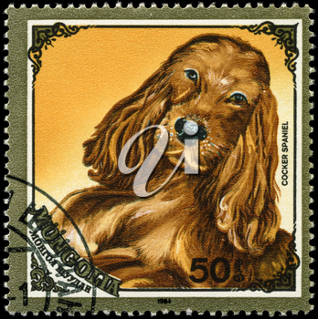 MONGOLIA - CIRCA 1984: A Stamp printed in MONGOLIA shows image of a Cocker Spaniel from the series Dogs, circa 1984