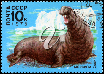 USSR - CIRCA 1978: A Stamp printed in USSR shows image of a Sea Elephant from the series Antarctic Fauna, circa 1978