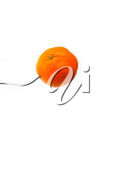 fresh ripe vibrant orange mandarin tangerine on fork isolated over white