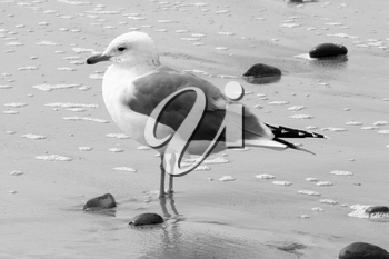 Royalty Free Photo of a Seagull at the Beach