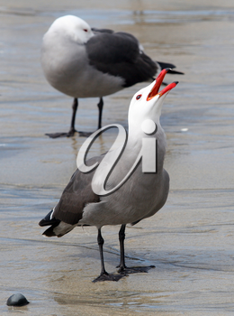 Royalty Free Photo of Seagulls