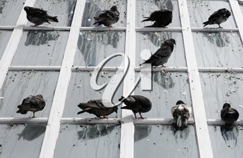 Royalty Free Photo of Pigeons Sitting on a Window