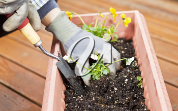 Hands, wearing gloves, holding hand tool with flowers in flowerbed on cedar deck