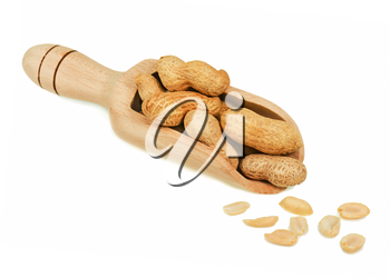 Pile of dry roasted peanuts in scoop isolated on white background. Closeup.