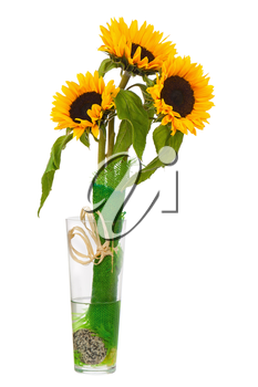 Still Life with Sunflowers in Glass Vase Isolated on White Background. Closeup.