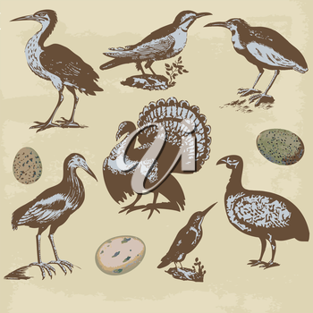 Vintage birds illustrations. Vector set