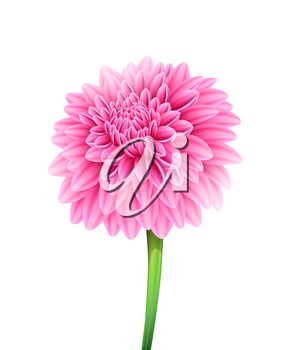 Vector illustration of Blooming beautiful aster flower