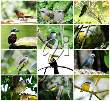 Royalty Free Photo of a Bird Collage