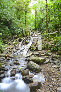 Small river bed in the lush rain forest of Panama with slow shutter showing the flow of the water