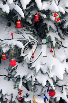 Christmas ornaments handing on snow covered spruce tree outside