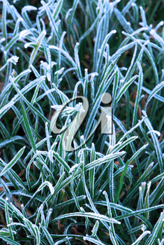 Background of frosty grass blades on a cold fall morning