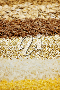 Background of different kinds of grains close up