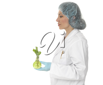 An agricultural scientist, geneticist or botanist holding a plant grown and nurtured in a laboratory.