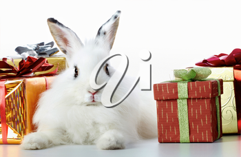 Image of cautious rabbit surrounded by giftboxes