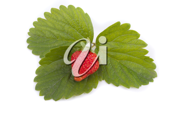 Red strawberry on green leaves.