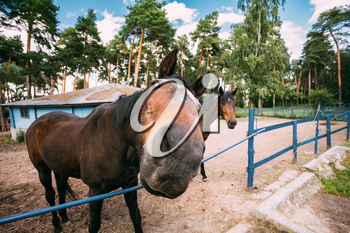 Funny Brown Horse Photographed A Wide Angle Lens