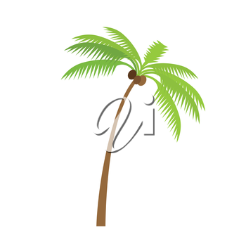 Palm tree silhouettes with coconut. Vector illustration isolated on white background