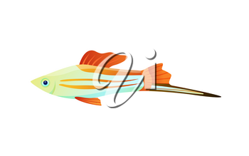 Colorful swordtail fish color vector illustration, underwater dweller with long appendix, set of flexible flippers and camouflage stripes on body