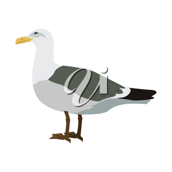 Gull vector. Sea bird wildlife in flat style design. Illustration for prints, vacation advertising, childrens books illustrating. Beautiful Seagull bird seating isolated on white.