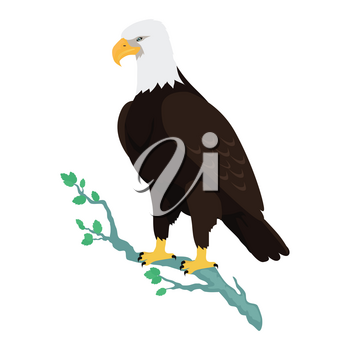 Bald eagle vector. Predatory birds wildlife concept in flat style design. North America fauna illustration. Picture for national symbolics, encyclopedia, books illustrating. Isolated on white.