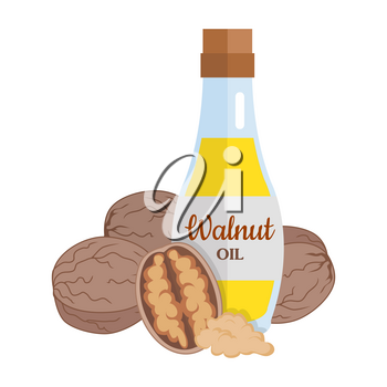 Walnut kernels with walnut oil. Ripe walnut in flat. Walnut butter in glass bottle. Several brown walnut kernels. Healthy vegetarian food. Vector illustration
