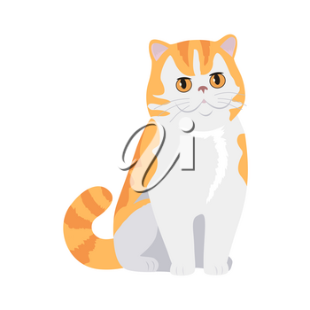 Exotic cat breed. Cute red cat seating flat vector illustration isolated on white background. Purebred pet. Domestic friend and companion animal. For pet shop ad, animalistic hobby concept, breeding