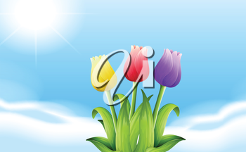 Illustration of the three blooming flowers under the sunlight