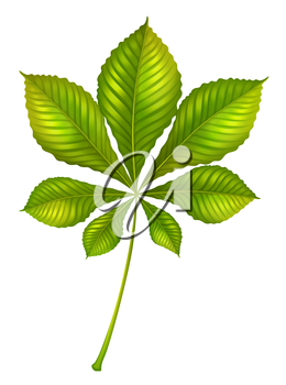 Illustration of a green leafy plant on a white background