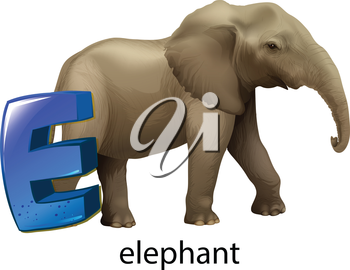 Illustration of a letter E for elephant on a white background