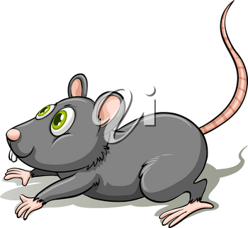 A gray rat on a white background